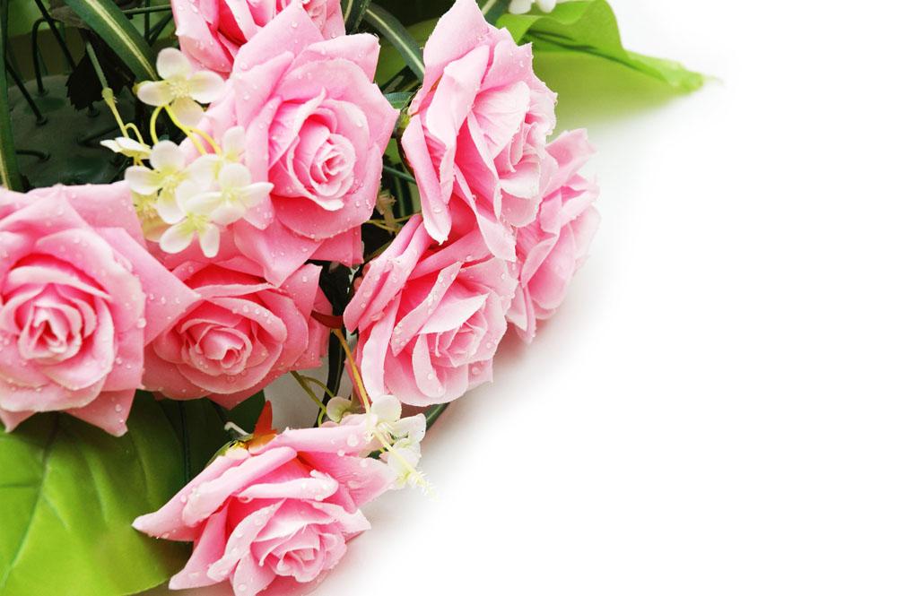 玫瑰花摄影 图片素材下载-花草树木-生物世界-图片图片