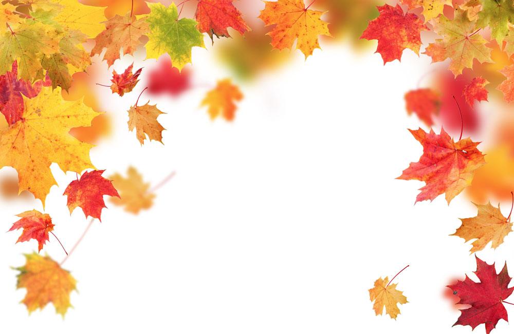 集图网 图片素材 背景花边 底纹背景 飘落的树叶,秋天树叶背景,秋天枫图片