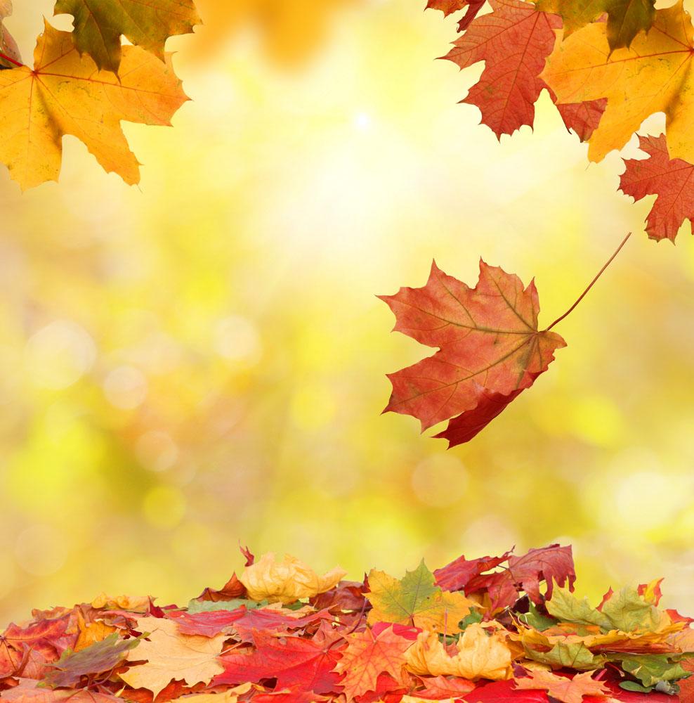 集图网 图片素材 背景花边 底纹背景 落叶,飘落,树叶,秋天,叶子,枫叶图片