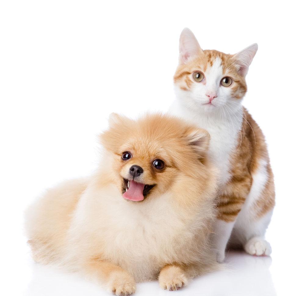 可爱的猫狗 图片素材下载-陆地动物-生物世界-图片
