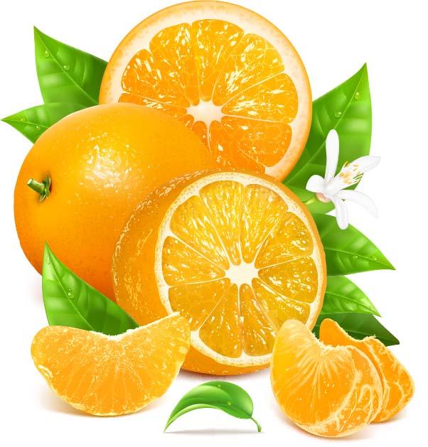 集图网 矢量素材 生物世界 蔬菜水果 橙子,卡通橙子,橘子,新鲜水果