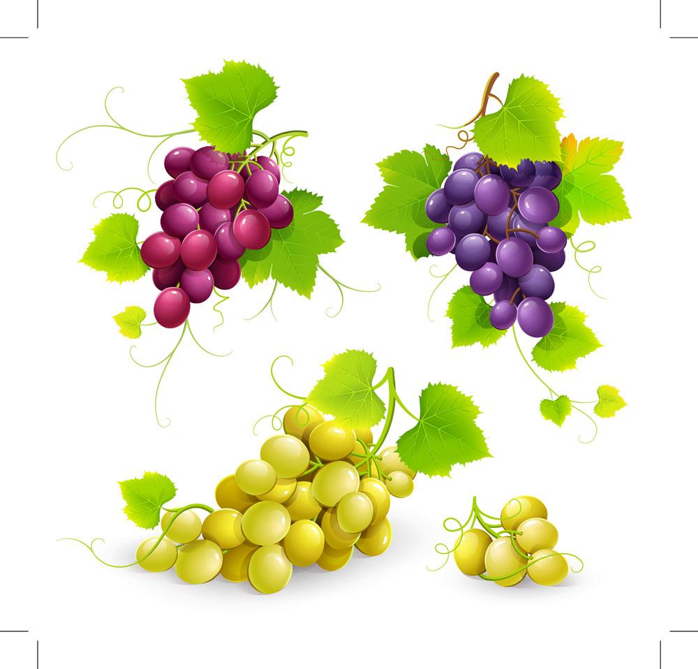 提子,葡萄,新鲜水果,果实,水果蔬菜,餐饮美食,卡通水果,手绘水果,蔬菜图片