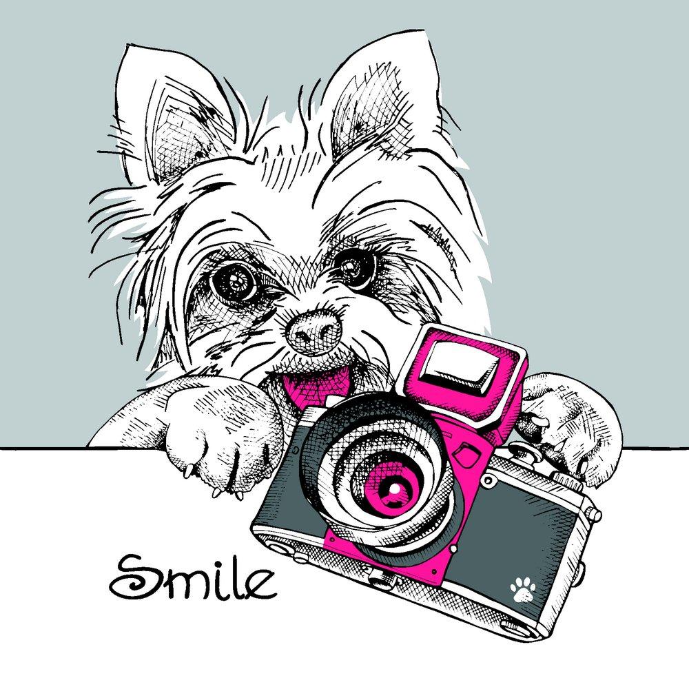 照相机与卡通小狗图片