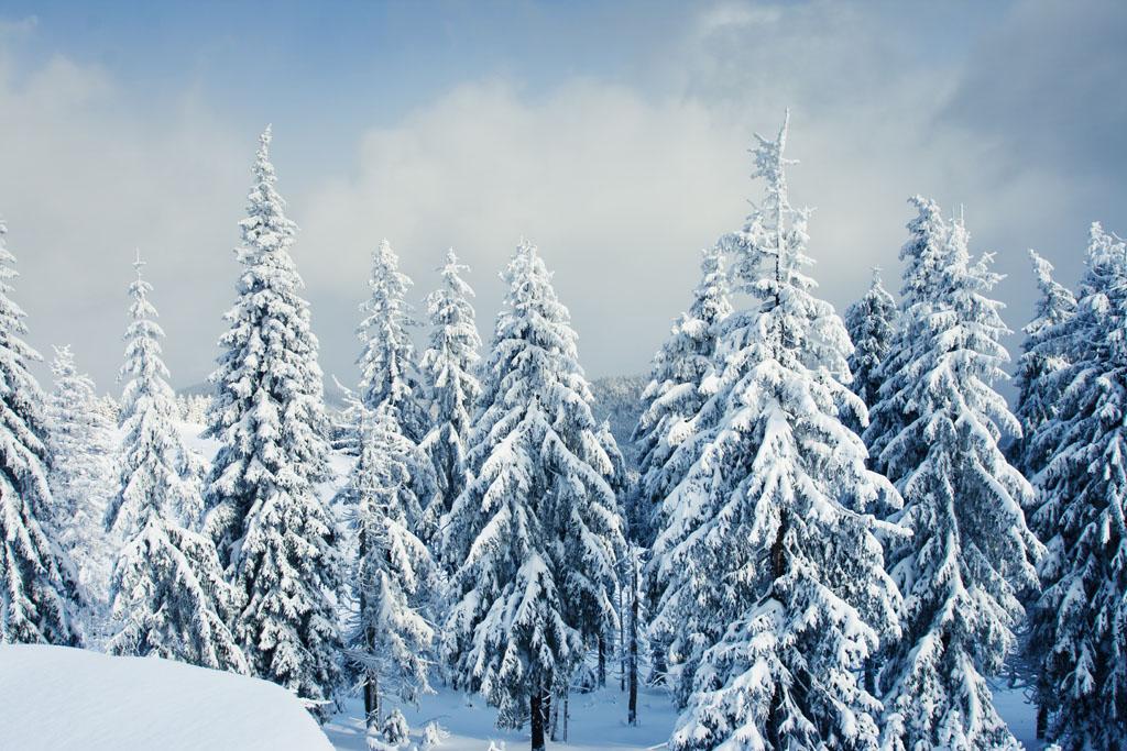 公园小径简笔画_冬天树的变化-冬天不落叶的树有哪些-冬天的树有什么变化-各种