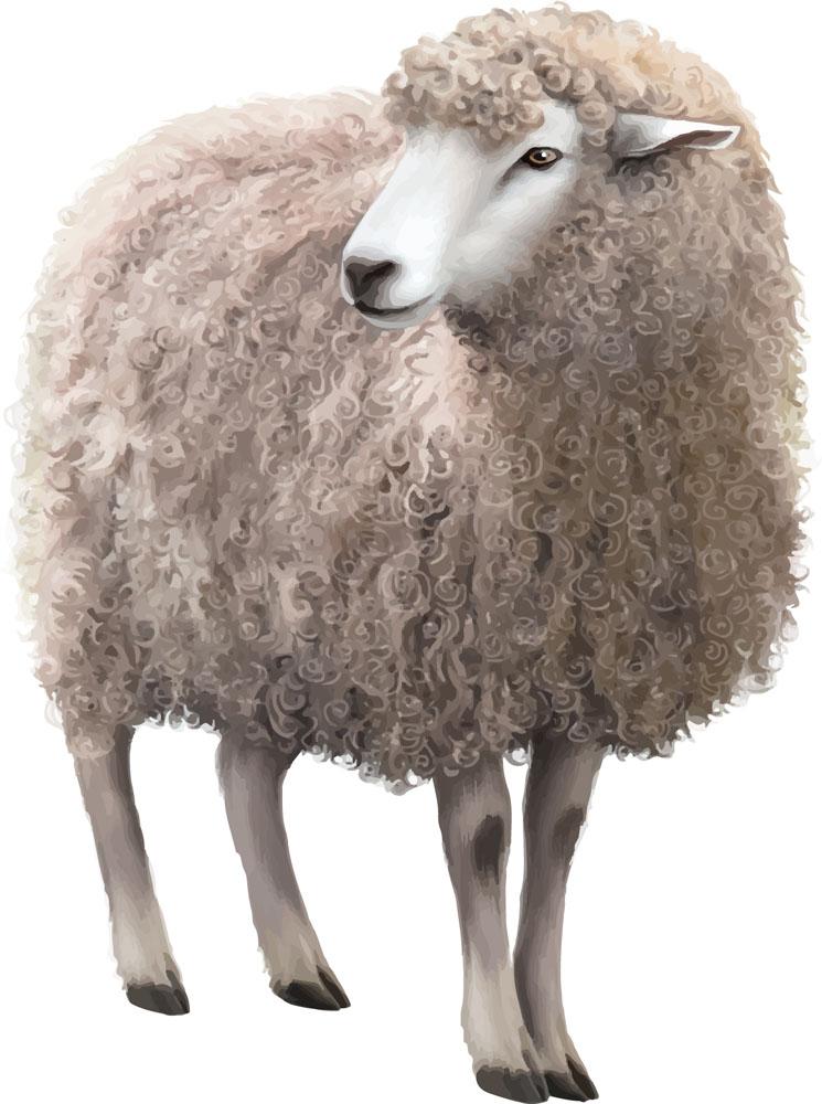小猪PK小绵羊自称瓢神的他会带来怎么的视觉盛宴呢