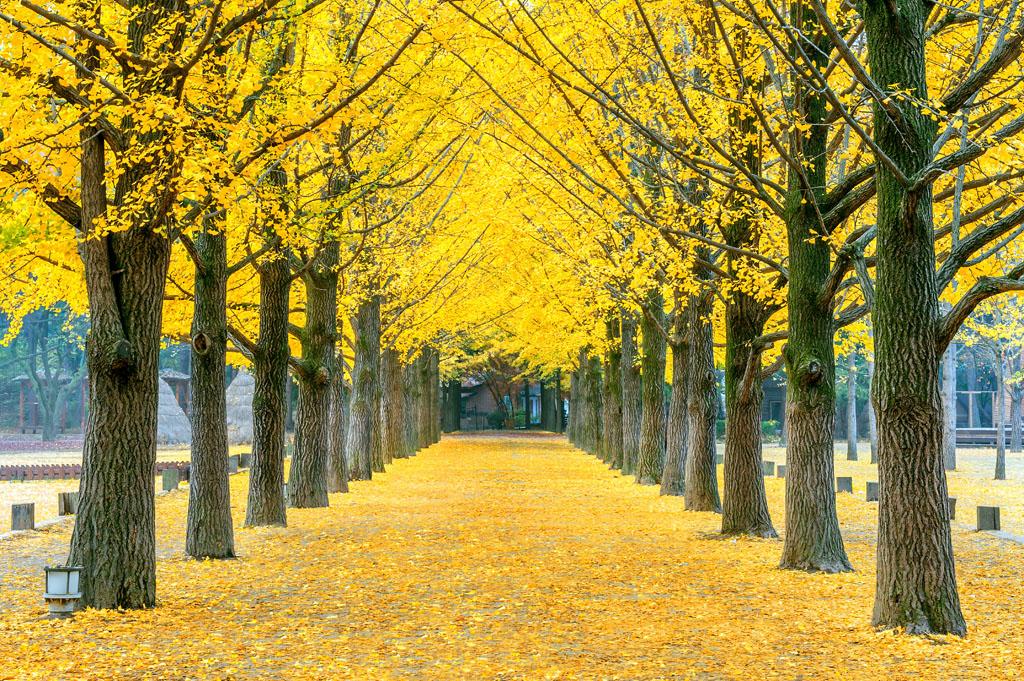 秋天的风景图片-秋天的风景作文,秋天的风景儿童画,秋季风景图片大全